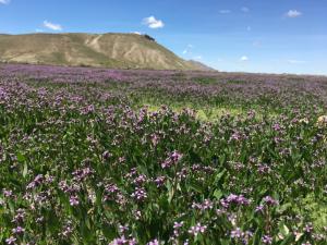 Utah Update – Spring Cleanup