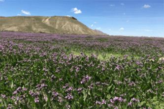 Introduction – Utah